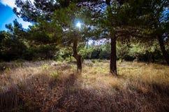 阳光通过树 免版税库存图片