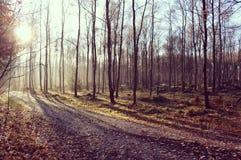 阳光通过树 图库摄影