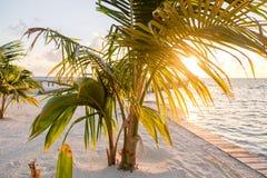 阳光通过棕榈叶状体 免版税库存照片