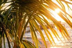 阳光通过棕榈叶状体 库存图片