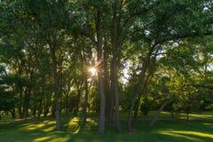 阳光通过森林和绿草 免版税图库摄影