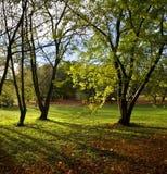 阳光通过森林地结构树 免版税库存图片