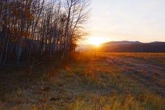 阳光通过森林 免版税库存照片