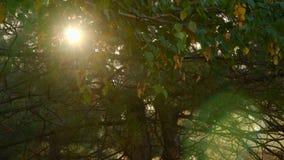 阳光通过秋叶 影视素材