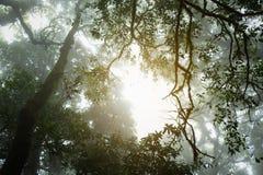 Â阳光通过绿色森林 免版税图库摄影