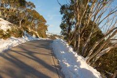 阳光通过雪胶分支在登上比勒顶部的 免版税库存照片