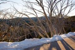 阳光通过雪胶分支在登上比勒顶部的 免版税库存图片
