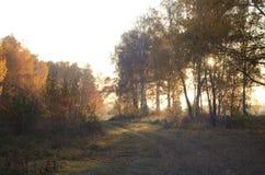 阳光通过黄色叶子 库存照片