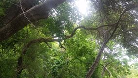 阳光通过结构树 免版税库存照片