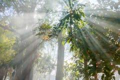 阳光通过轻的树和雾 免版税库存图片