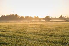 阳光雾和农场 库存图片