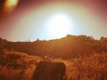 阳光震动 库存照片