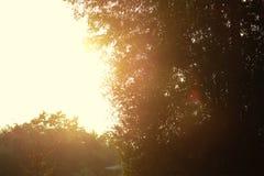 阳光 免版税图库摄影