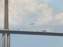 阳光Skyway桥梁,坦帕湾,佛罗里达,鹈鹕飞行 免版税库存照片