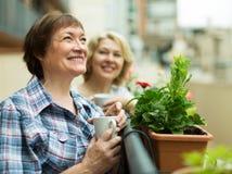 阳台的老妇人用咖啡 免版税图库摄影