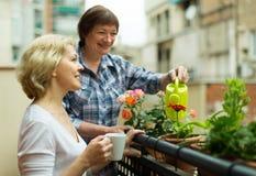 阳台的老妇人用咖啡 免版税库存照片