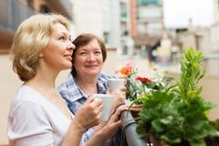 阳台的老妇人用茶 库存图片