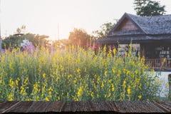阳大麻花被归档的,柚子& x28; 迷离image& x29;选择的fccus w 库存照片
