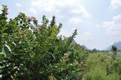 阳朔裕隆由河的一个领域 免版税库存图片