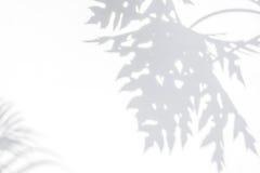 阴影在白色墙壁上的番木瓜叶子抽象背景  图库摄影