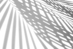 阴影抽象背景棕榈叶在白色墙壁上 库存照片