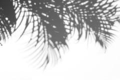 阴影抽象背景棕榈叶在白色墙壁上 免版税库存图片