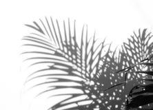 阴影抽象背景棕榈叶在白色墙壁上 库存图片