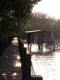 阴影木桥梁在mangroove森林里 图库摄影