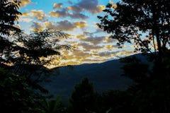 阴影树晚上天空 免版税库存照片