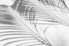 阴影棕榈叶抽象背景在白色墙壁上的 黑色白色 免版税库存图片