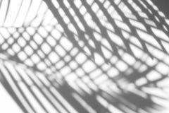 阴影棕榈叶抽象背景在白色墙壁上的 免版税图库摄影