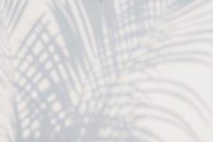 阴影棕榈叶抽象背景在白色墙壁上的 库存照片
