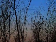 阴影背景,在日落以后的干燥树 库存例证