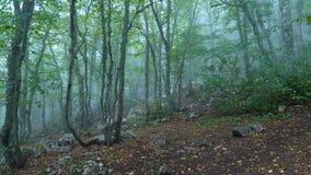 阴沉的有雾的森林 影视素材