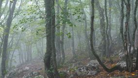 阴沉的有雾的森林 股票视频