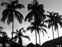 阴沉的棕榈树 免版税库存照片