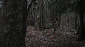 阴沉的秋天森林 影视素材