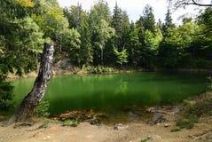 阴沉的绿色湖 免版税库存照片
