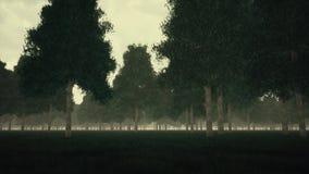 阴沉的黑暗的森林和雾 影视素材
