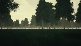 阴沉的黑暗的森林和雾 股票视频