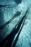阴霾木头 免版税库存图片