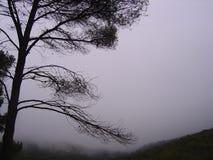 阴霾视图和一棵裸体树在山脉埃斯普尼亚山 库存图片