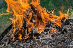 阵营火在森林里 图库摄影