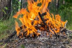 阵营火在森林里 免版税库存照片