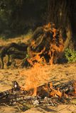 阵营火森林 免版税图库摄影