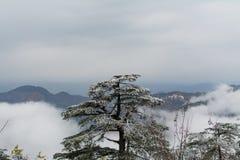 阻拦山的树 免版税库存照片