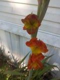 阿伦特很可爱这些的花!! 库存图片