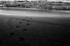 阿卡普尔科海滩和海 库存图片