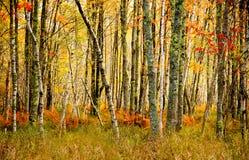 阿卡迪亚国家森林秋天颜色。 免版税库存照片