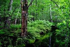 阿卡迪亚缅因国家公园 库存图片